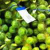 Thumbnail image for Fall Fest: Bodacious Brassicas