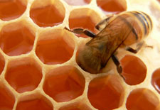 Thumbnail image for Oh, Honey
