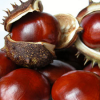 Thumbnail image for Chestnuts: The Taste of December
