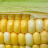 Thumbnail image for Corn: Sweet Versatility