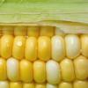 Thumbnail image for Corn: Sweet Versatility