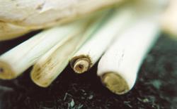 Thumbnail image for Lemongrass: Perfumed Allure