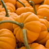 Thumbnail image for Into the Pumpkin Patch