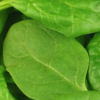 Thumbnail image for Spinach: An Unexpected Indulgence