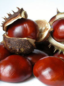 Post image for Chestnuts: The Taste of December