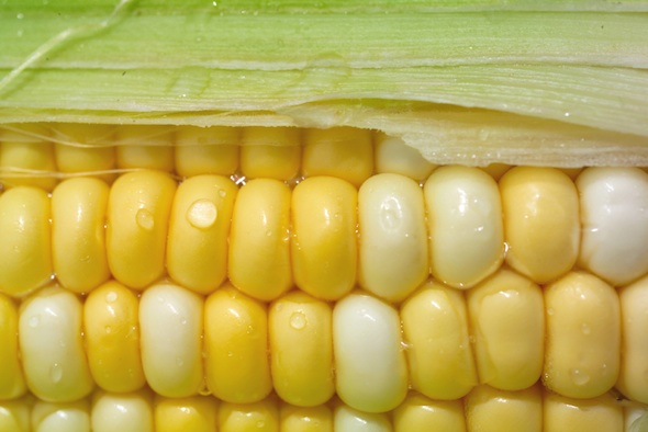 Post image for Corn: Sweet Versatility