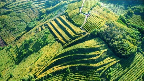 Post image for ReMARKable Palate #250: The Wines of Soave