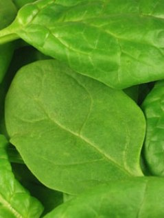 Post image for Spinach: An Unexpected Indulgence